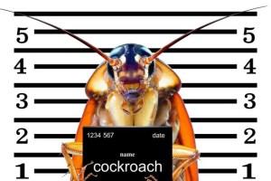 bug ID Presidio Pest Management