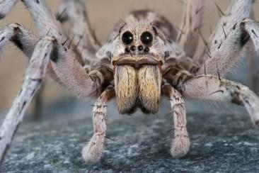 spiders 300x200