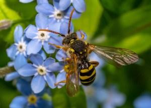 wasps scaled