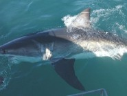 The boy's death was the seventh shark-related death since 2011.