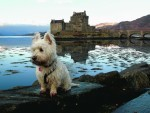 Here is Murphy the west highland terrier at Eillean Donan Castle. Murphy stays in Portree with John Lydia and sister Callie the collie and is our canvas winner this week.