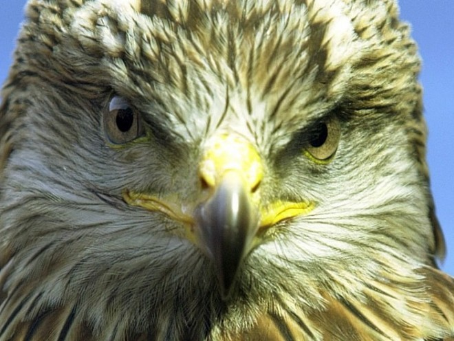 The report painted a mixed picture regarding the fortunes of Scotland's birds of prey