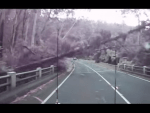 The tree violently smashes into the road due to the high Australian winds