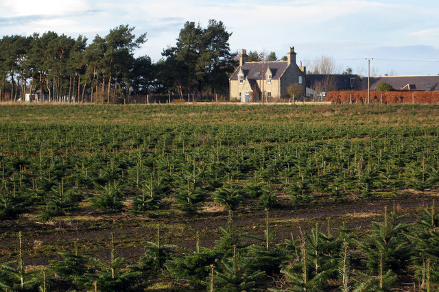 Fancy Buying A Christmas Tree Farm Near Nairn? That'll Be