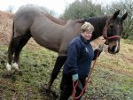 Pat Dorward with her horse Dhabi, who was attacked by a dog whilst she was riding him in Countesswells Park at the weekend.    Picture by Kami Thomson