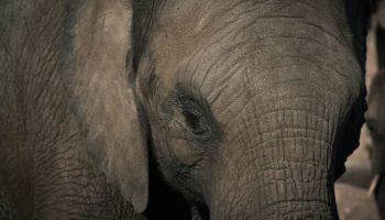 Simbabwe,Tiere,Elefanten,US-Regierung,News