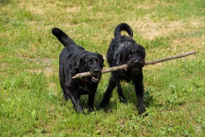 Hunde-Attacken,Hunde,Tiere,Computer,Telekommunikation, Medien,Kommunikation,Netzwelt,Forschung,Liverpool