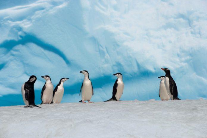 Antarktis,News,Presse,Aktuelles,Nachrichten,Abenteurer ,Colin O'Brady