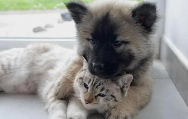 Haustiere,Tiere,Presse,News,Medien,Aktuelle