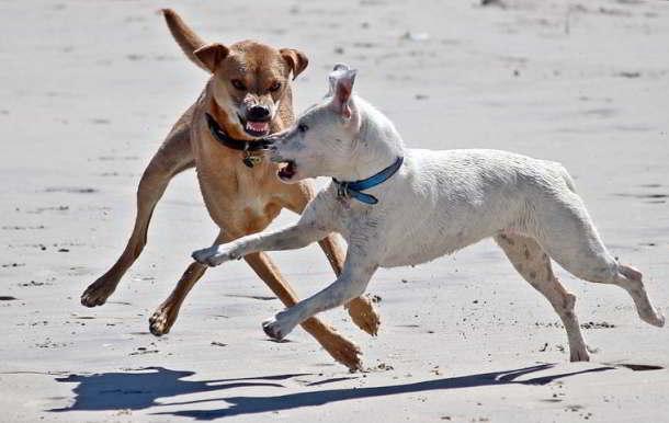 Hunde,Ludwigshafen,Presse,News