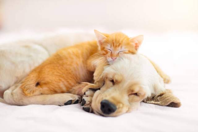 Hunde,Tiere,Presse,News,Medien,Aktuelle