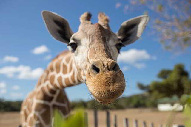 Tierpark, Zoo, Presse,News,Medien