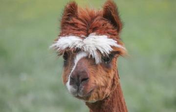 Tierhaltung,Niedersachsen,Otte-Kinast,Politik,Presse,News,Medien