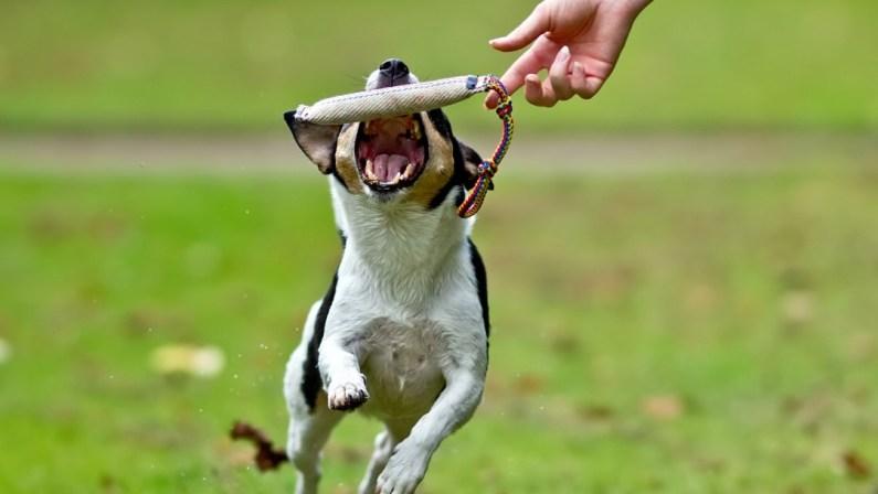 positiv træning for hunde