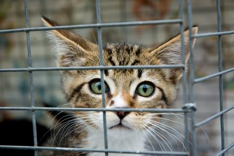 Fritgående katte generer mange