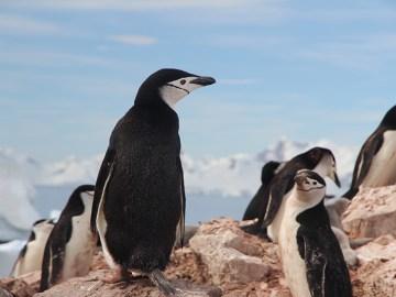 Stärken stärken das Pinguin Prinzip Hirschhausen