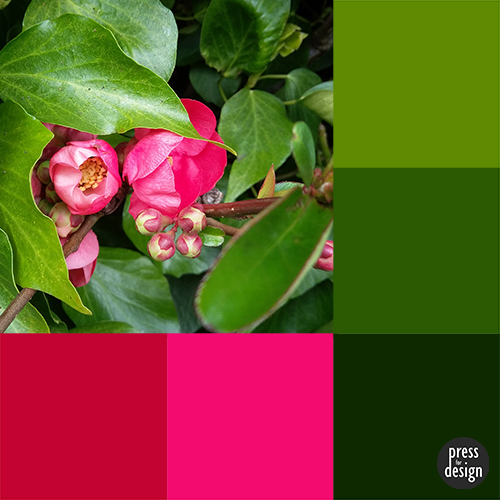 Tuesday Colour Inspiration: Ornamental Quince