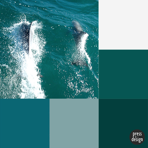 Tuesday Colour Inspiration: Sailing with Dolphins