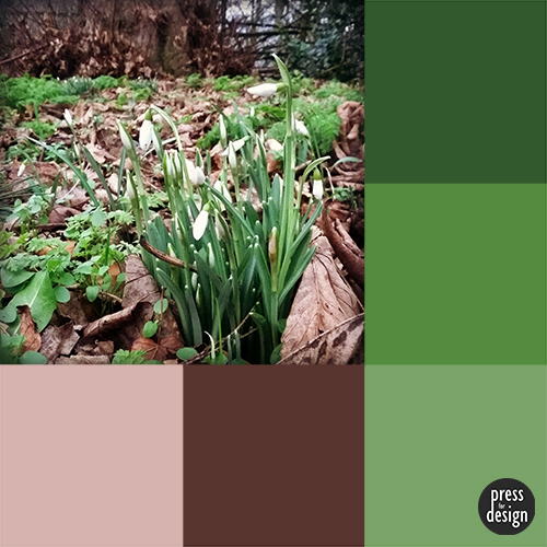 Tuesday Colour Inspiration – Snowdrops