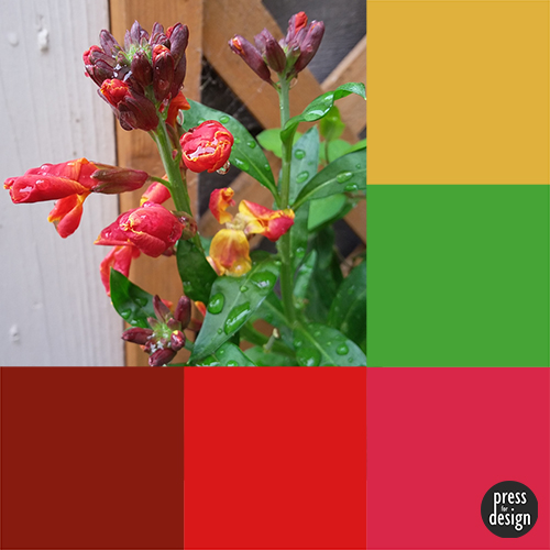 Tuesday Colour Inspiration: Wallflower in Spring Shower
