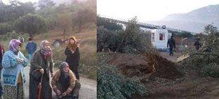 Yırca'da zeytinler kesildi, özel güvenlik köylülere saldırdı!