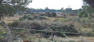 Golf sahası için ağaç kesimi başladı!