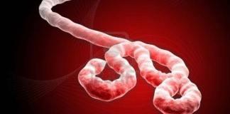 Ebola vaka sayısı 20 bini aştı