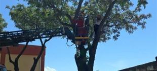 Kedi kurtarmaya çıktığı ağaçta mahsur kaldı