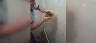 Su borusuna sıkışan bebek kedi kurtarıldı