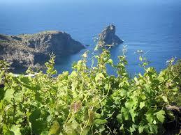 Giornata nazionale dell'assaggiatore di vino: la Sicilia è protagonista a Pantelleria
