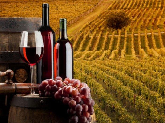 L'Italia al primo posto nella produzione di vino