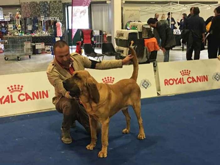 Per tutto il fine settimana a Umbria Fiere il Perugia Pet