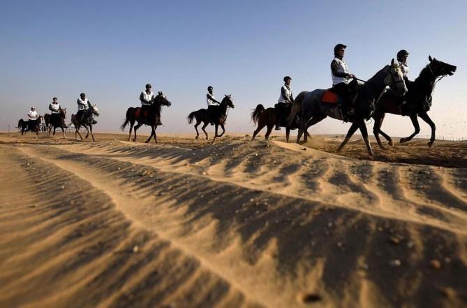 cavalieri deserto