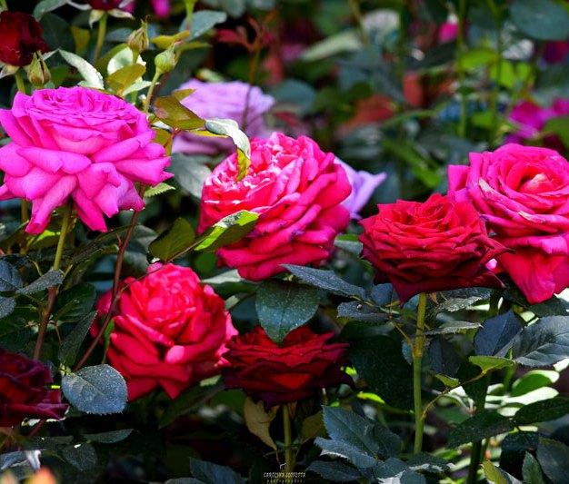 Firenze-Flower-Show-1