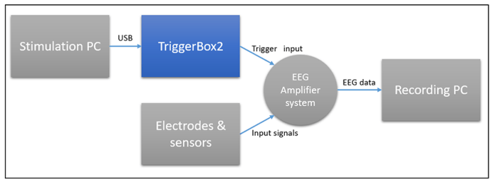 TriggerBox - Fig1: Standard setup to record EEG and USB generated markers. TriggerBox links the USB output of your PC with the trigger input of your amplifier.