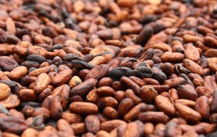 Cocoa Seed Extract Market Insights, Forecasts and Opportunities 2019 2