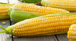 Corn Based Ingredients Market Boosting the Growth Worldwide: Market Dynamics And Trends, Efficiencies Forecast 2024 2