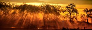 gary-cedar-photography-wetlands-10