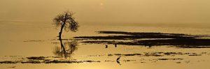 gary-cedar-photography-wetlands14.jpg