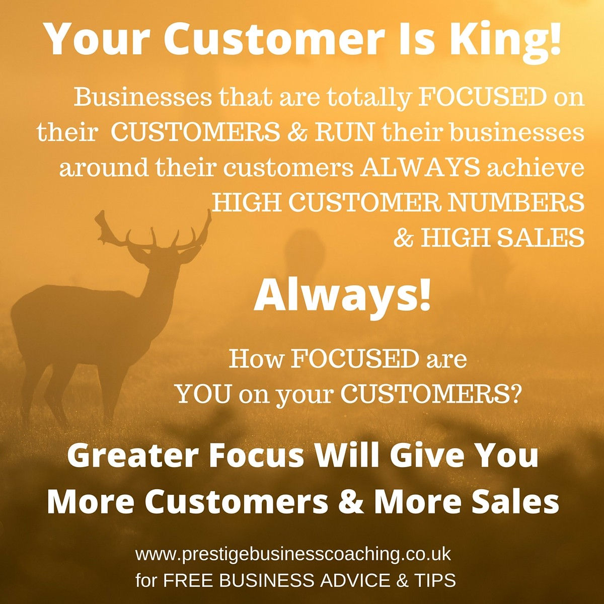 Your Customer Is King - RUN YOUR BUSINESS AROUND YOUR CUSTOMER TO ACHIEVE GREATER SALES