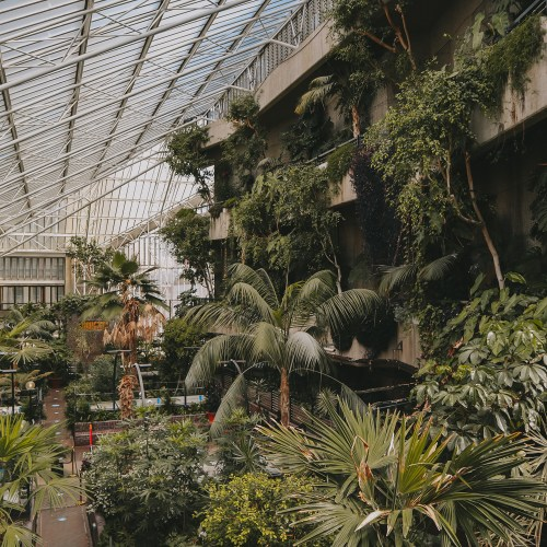 Greenery in the city - Barbican Conservatory