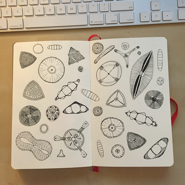 daily art practice - diatoms