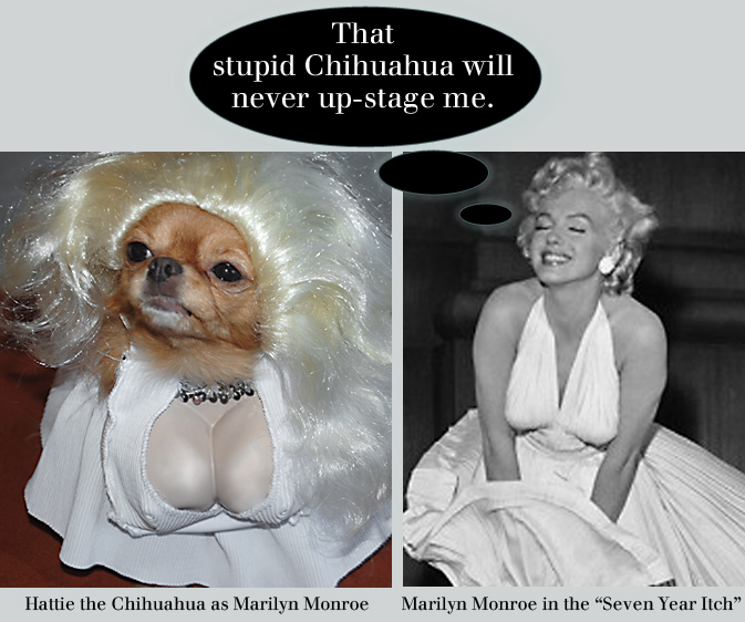 Marilyn Monroe and Hattie the Chihuahua as Marilyn