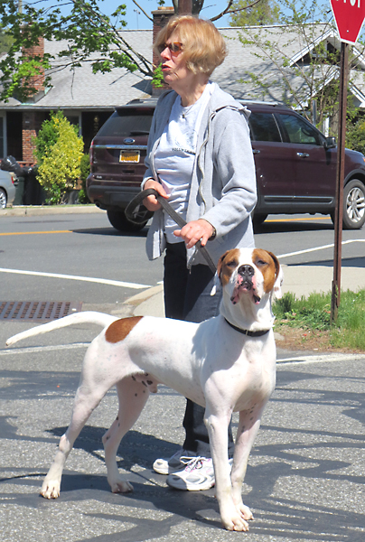 James-Coonhound-Mix-Dog
