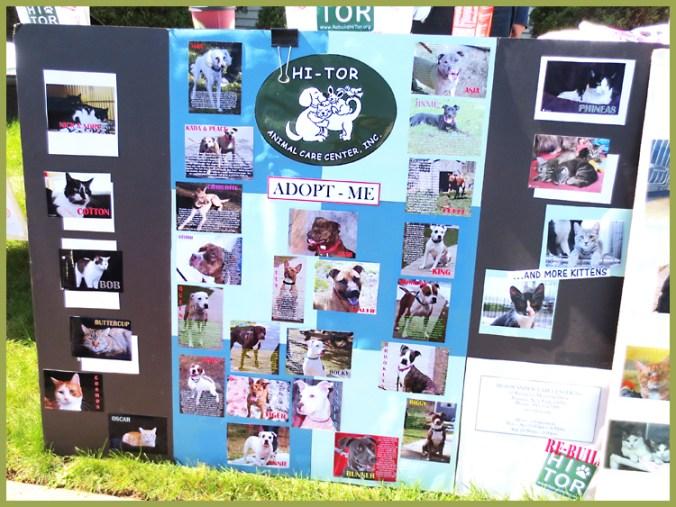 Adopt pets at Hi-Tor Animal Shelter Pomona NY