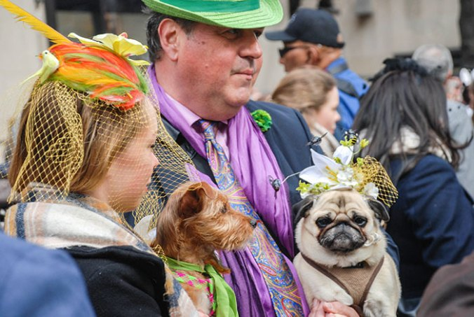 Dog couture at the easter hat parade 2016 nye