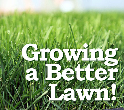 How To Grow A Better Lawn Grass Seeds Do Make The