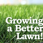 How to Grow a Better Lawn – Grass Seeds DO Make the Difference