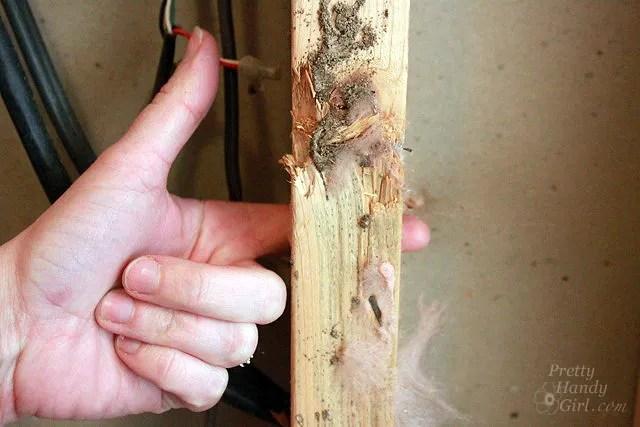 finger_through_termite_damage