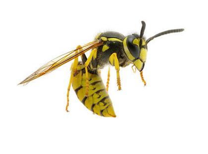 Flying Yellow Jacket | Pretty Handy Girl